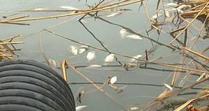 Екологічна катастрофа на Олесницькому озері у Борисполі сколихнула все місто