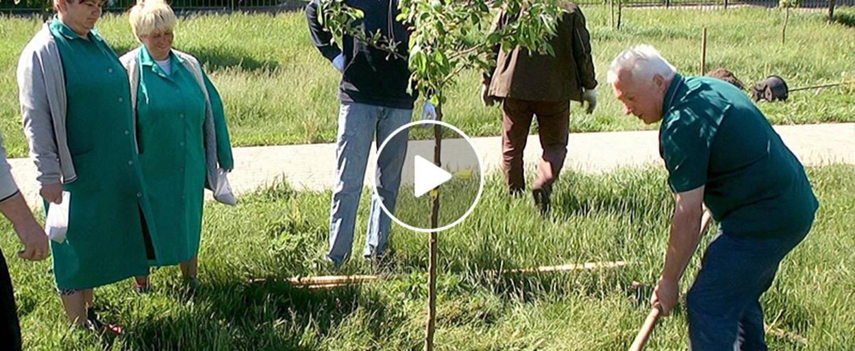 У Борисполі створюють справжній дендропарк – висадили більше 30 унікальних дерев. Відео