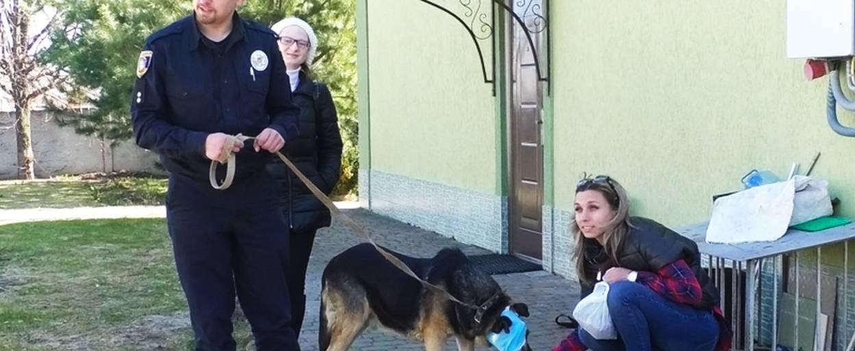 Волонтери та патрульні Борисполя борються за життя понівеченого пса. Відео