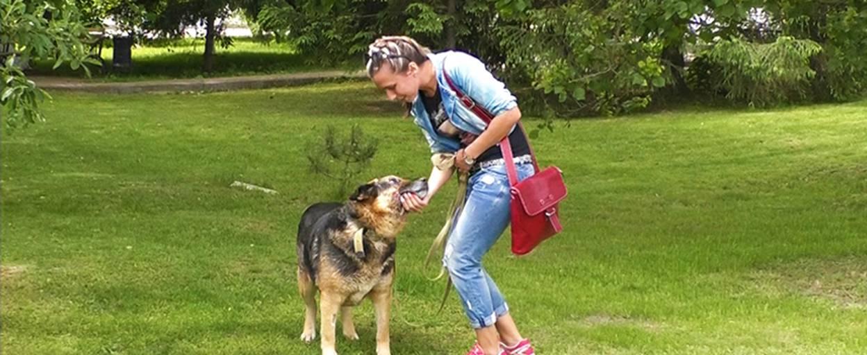 Чотирилапий Бой шукає родину: врятована патрульними німецька вівчарка одужує. Відео