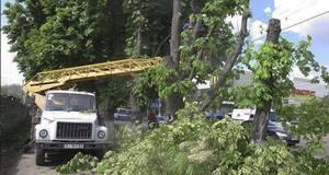 Проти вирубки дерев вздовж центральної вулиці Борисполя виступив місцевий активіст
