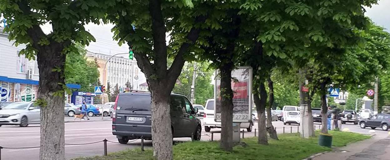 Чи знищать каштани у центрі Борисполя: відповідь міської влади