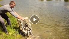Товстолобики проти водяного горіха: у Княжицьке озеро випустили півтонни риби