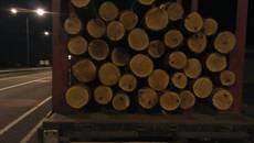 Незаконне перевезення деревини: патрульні зупинили дві вантажівки неподалік Борисполя. Фото