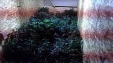 Плантацію коноплі виявили у будинку 44-річного жителя села Мала Олександрівка. Фото