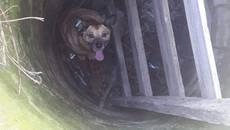 Порятунок чотирилапого: рятувальники Борисполя визволили собаку з пастки. Фото