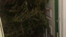 На Бориспільщині, у будинку раніше судимого чоловіка, вилучили понад 16 кг конопель. Фото