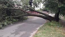 Через негоду у Борисполі повалено багато дерев та пошкоджено лінії електропередач. ФОТО