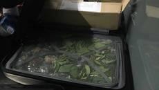 У «Борисполі» затримали партію тропічних рослин, яку незаконно намагались ввезти в Україну. Фото